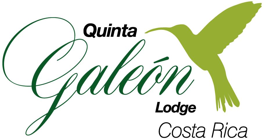 Quinta Galeón | From Our Guests - Quinta Galeón